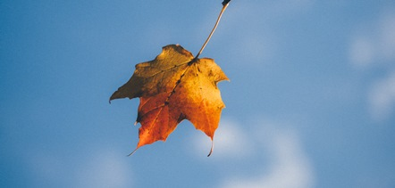 an autumn leaf