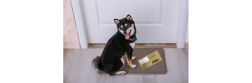 Dog with Household Enquiry Form